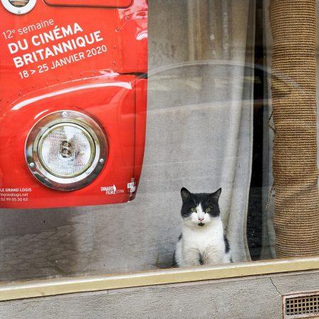 Un chat dans la vitrine